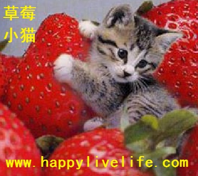 http://www.happylivelife.com/images/cat.jpg